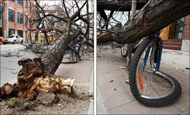 fallen tree || canon350d/efs10-22 | iso200 | handheld