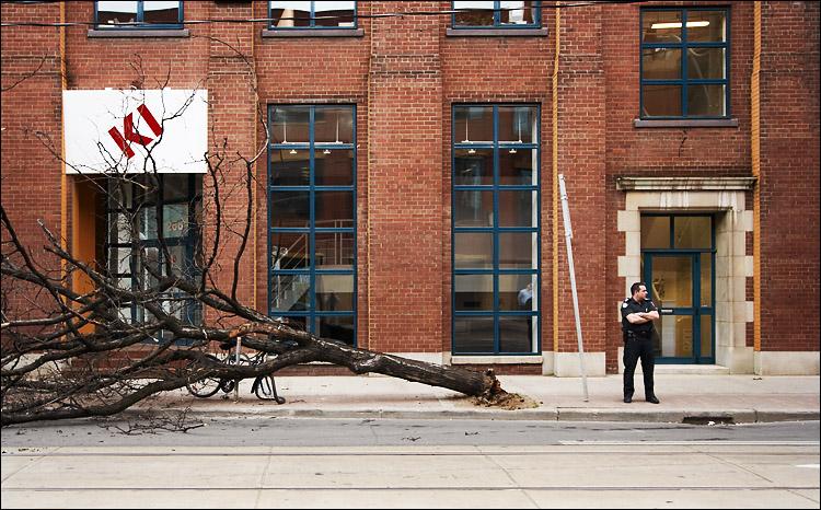 fallen tree || canon350d/efs10-22@22 | 1/60s | f5.6 | P | iso200 | handheld