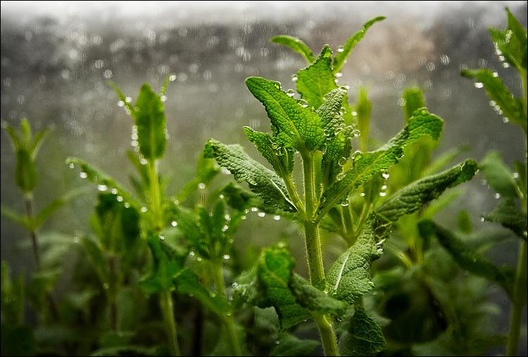 wet green || canon350d/efs10-22@22 | 1/60s | f6.3 | P | iso800 | handheld
