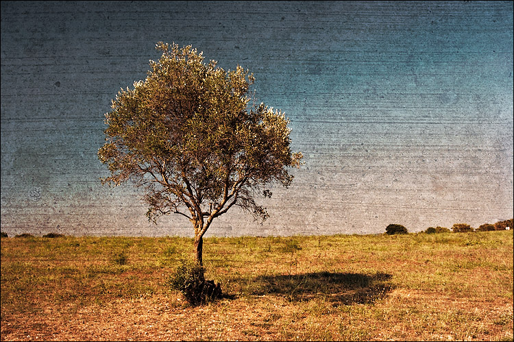 lone italian tree || canon350d/ef17040L@20 | 1/100s | f7.1 | P | iso100 | handheld