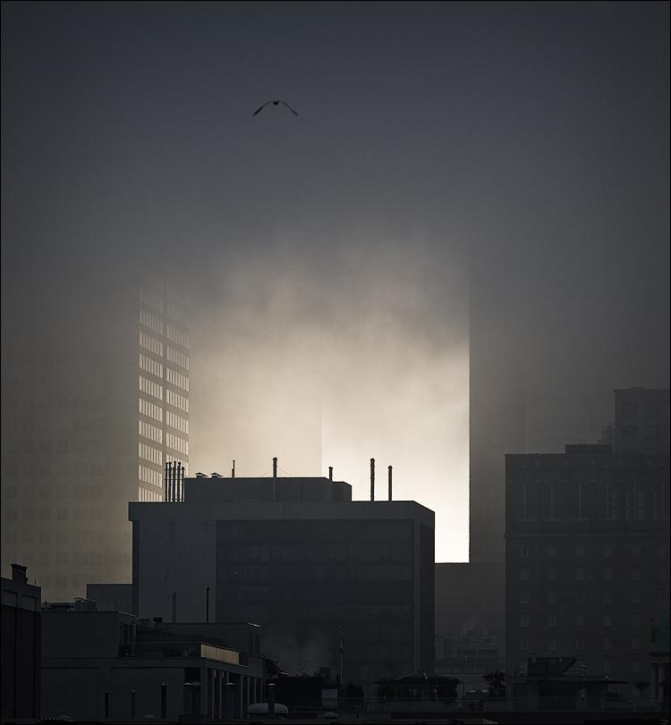 city bird || Canon5D/EF70-200f4L@200 | 1/400s | f6.3 | ISO100 | Handheld
