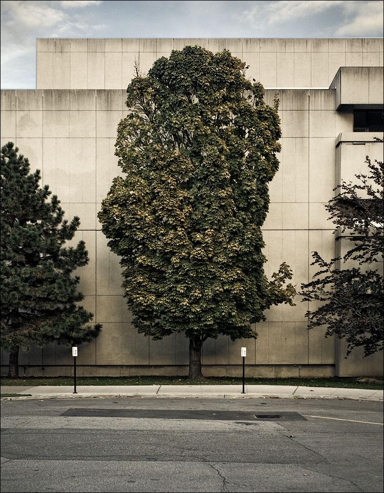big tree || Canon5D/EF17-40L@40 | 1/50s | f5 | ISO320 | Hanheld