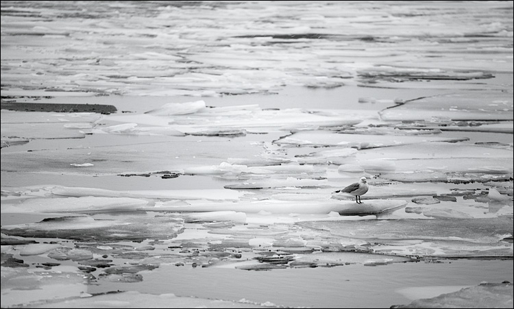 waiting on ice || Canon5D/EF70-200L@188 | 1/80s | f4 | ISO250 | Handheld