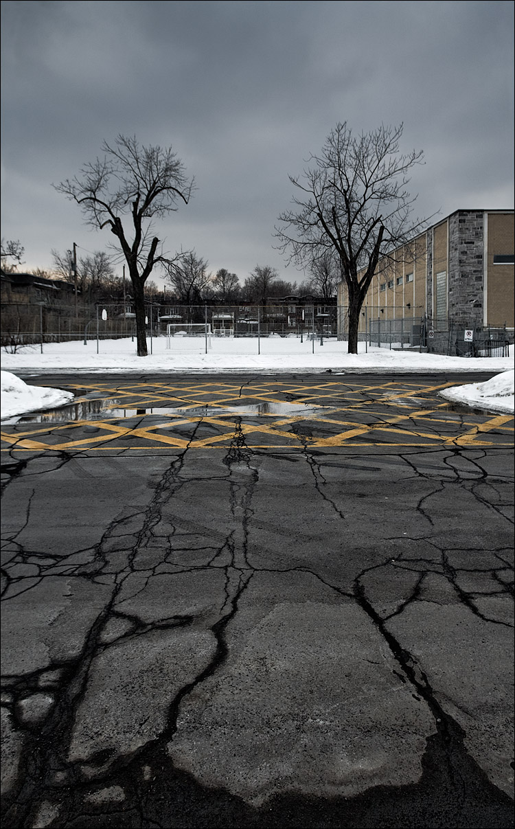 montreal_twin-trees_yellow-lines-asphalt_cracks_02.jpg
