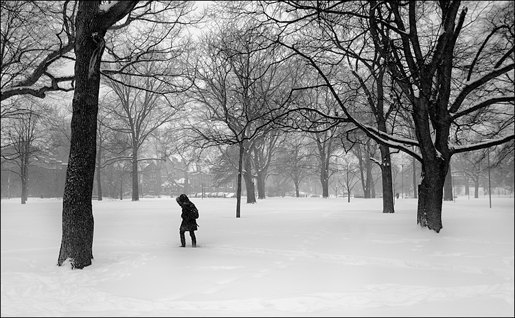 snow walker and trees    Canon5D/EF17-40L@29   1/80s   f4   ISO100   Handheld