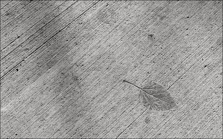 concrete leaf || Canon5D/TS-E24 | 1/400s | f8 | ISO100 | Handheld