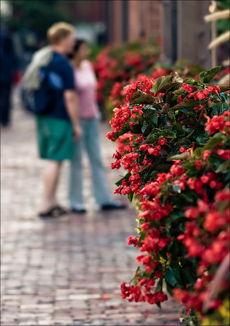 red flowers and cobblestones || SonyA700/Zeiss135 | 1/320s | f2.2 | ISO200 | Handheld