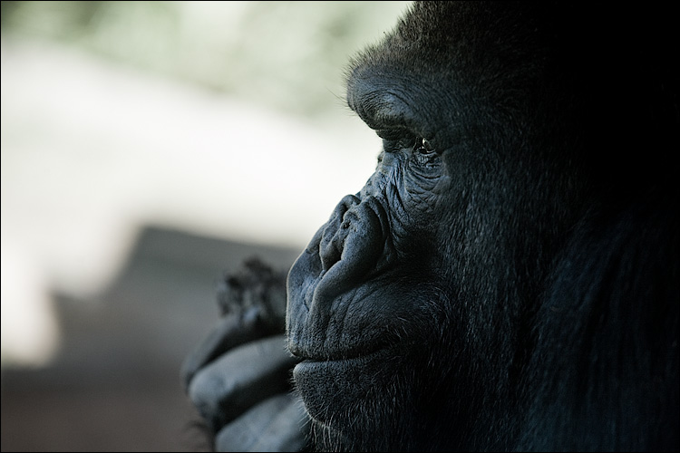 the wise || Canon5D/EF70-200Lf4 | 1/250s | f5 | ISO400 | Handheld