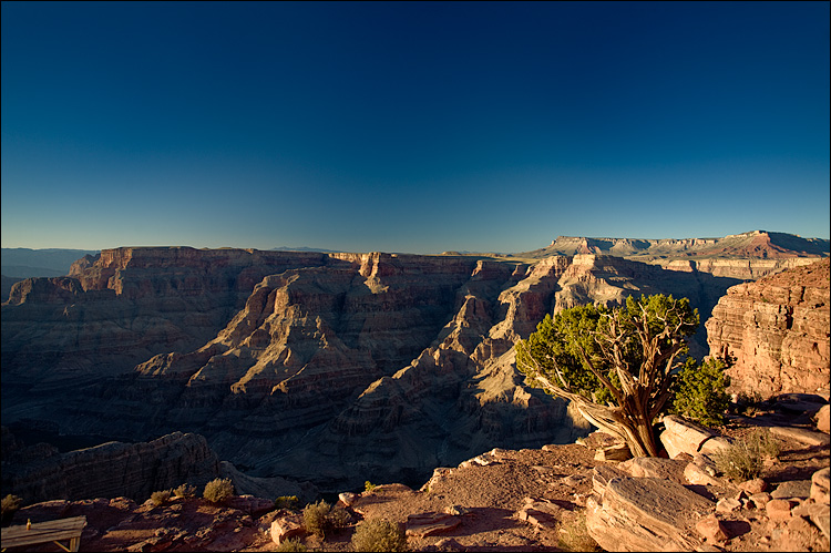 tree and the canyon    Canon5D/EF17-40L@22   1/60s   f5.6   ISO100