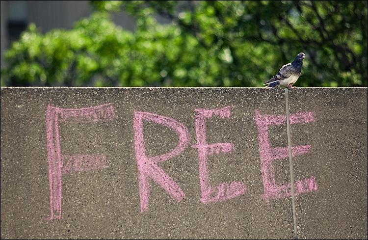 free bird || Canon5D2/EF200f2.8L | 1/1600s | f2.8 | ISO200