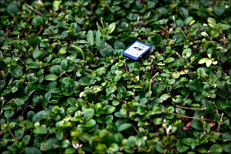 found card || Canon5D2/EF24-105L@105 | 1/200s | f4 | ISO100