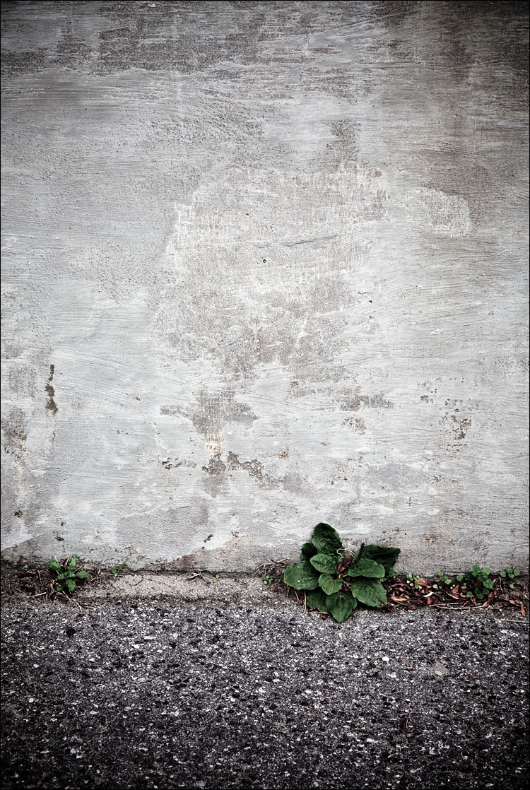green gone || Canon5D2/EF24-105f4L@105 | 1/100s | f7.1 | ISO200
