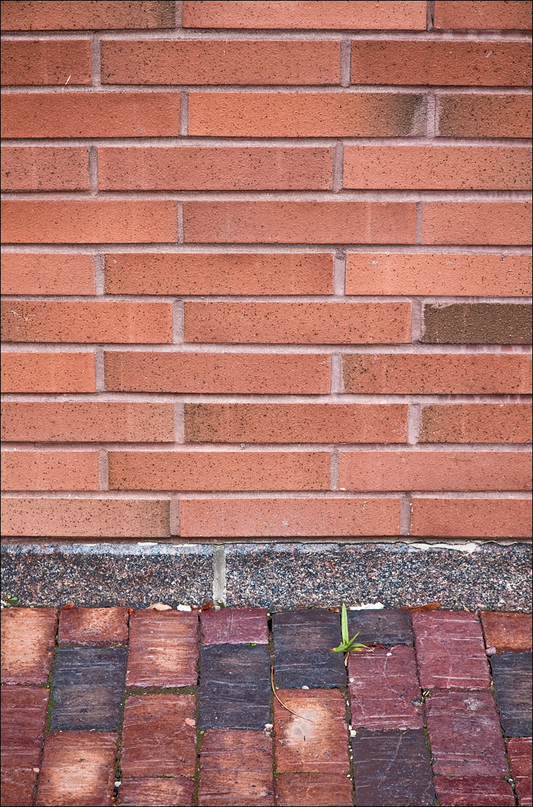 green on bricks || Canon5D2/EF24-105f4L@105 | 1/60s | f7.1 | ISO200