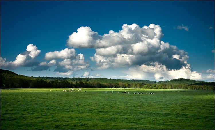 cows and clouds || Panasonic GF1/Pana20f1.7 | 1/2000s | f2.2 | ISO100