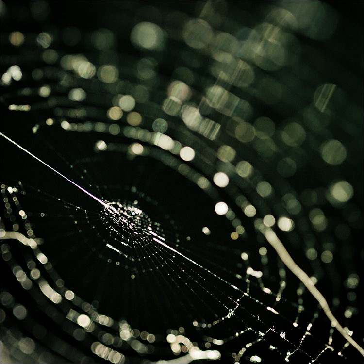web || Canon 5D2/EF100f2.8L | 1/250s | f2.8 | ISO800