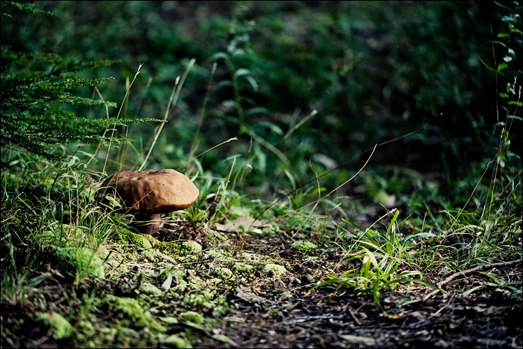 mushroom on green || Canon5D2/EF100f2.8L | 1/500s | f2.8 | ISO1600