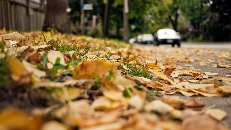 sidewalk leaves || PanasonicGF1/Pana20f1.7 | 1/1000s | f1.8 | ISO100