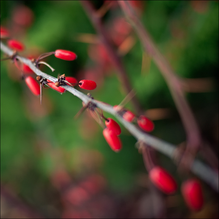 red and green || PanasonicGF1/Panaf1.7 | 1/160s | f1.7 | ISO100