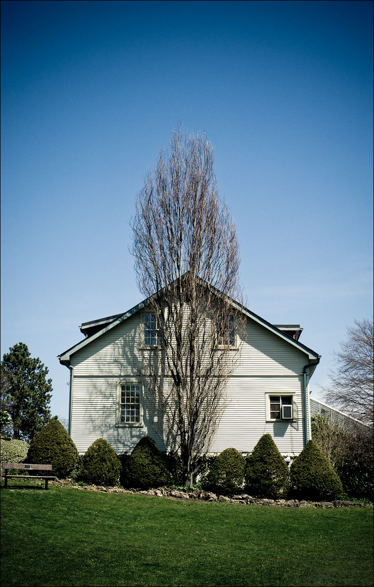 Tall tree and White house || Panasonic GH2/Vario 14-140@32 | 1/400s | f11 | ISO160