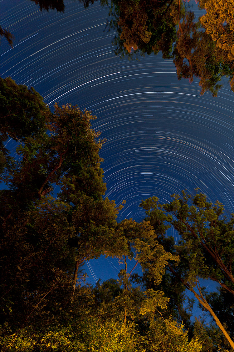 Polaris behind Trees || Canon5D2/EF17-40f4L@17 | 155m | f9 | ISO200