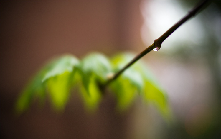 Waterdrop and the Leaf || PanasonicGH2/Noton f0.95 | 1/125s | f1 | ISO500