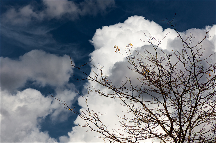 Last Leaves || Canon5D2/EF24-105f4L@105 | 1/1600s | f5.6 | ISO100