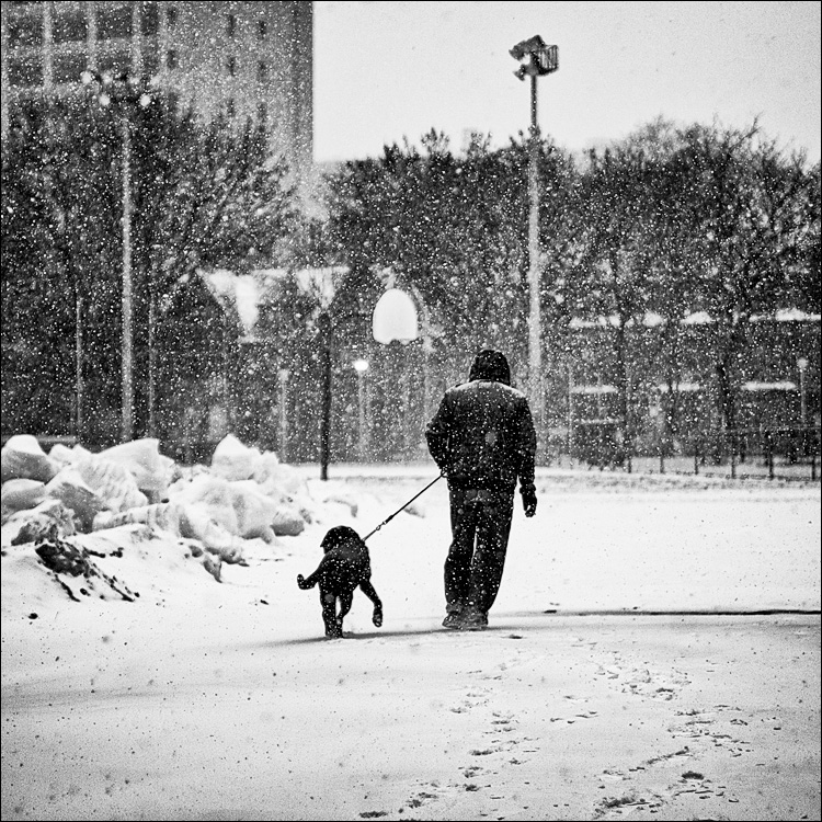 Dog Walking in Snow || Panasonic GH2/Olympus 45f1.8 | 1/800s | f1.8 | ISO100