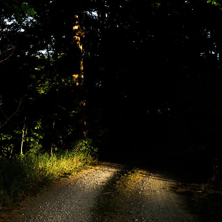 Dark Woods || Panasonic GX1/Lumix20f1.7 | 1/640s | f1.7 | ISO160