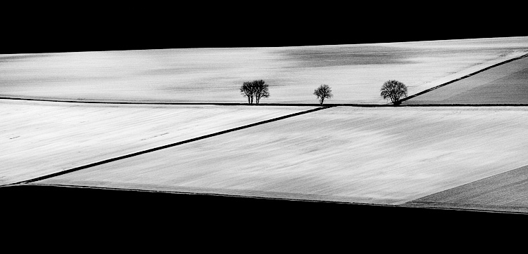 Lines and Trees || Panasonic GF1/Lumix14-140@140 | 1/500s | f5.8 | ISO100