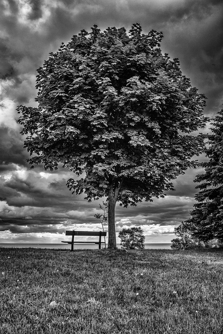 Tree and Bench || Panasonic GX1/Lumix7-14 | 1/160s | f5 | ISO160