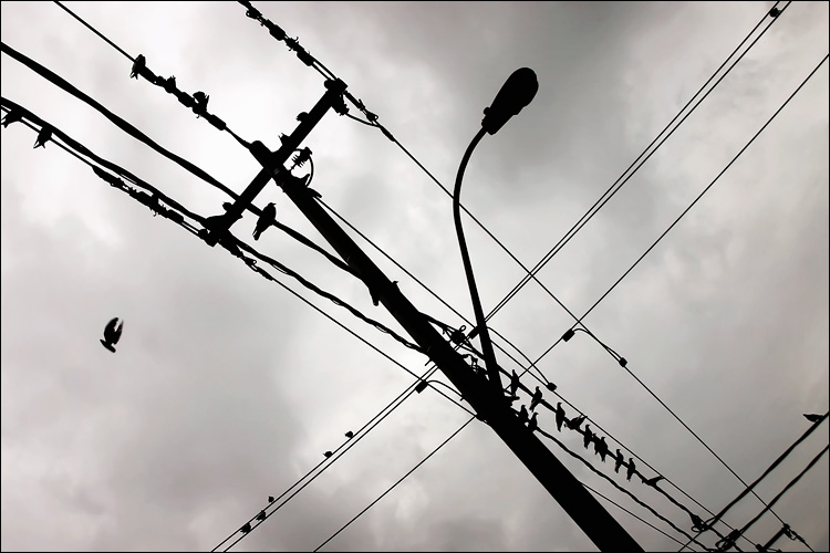 birds on wires || canon 300d/kit lens | 1/200s | f10 | ISO 100