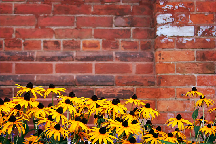 bricks and flowers || canon 300d/kit lens | 1/25s | f5.6 | ISO 200 | handheld