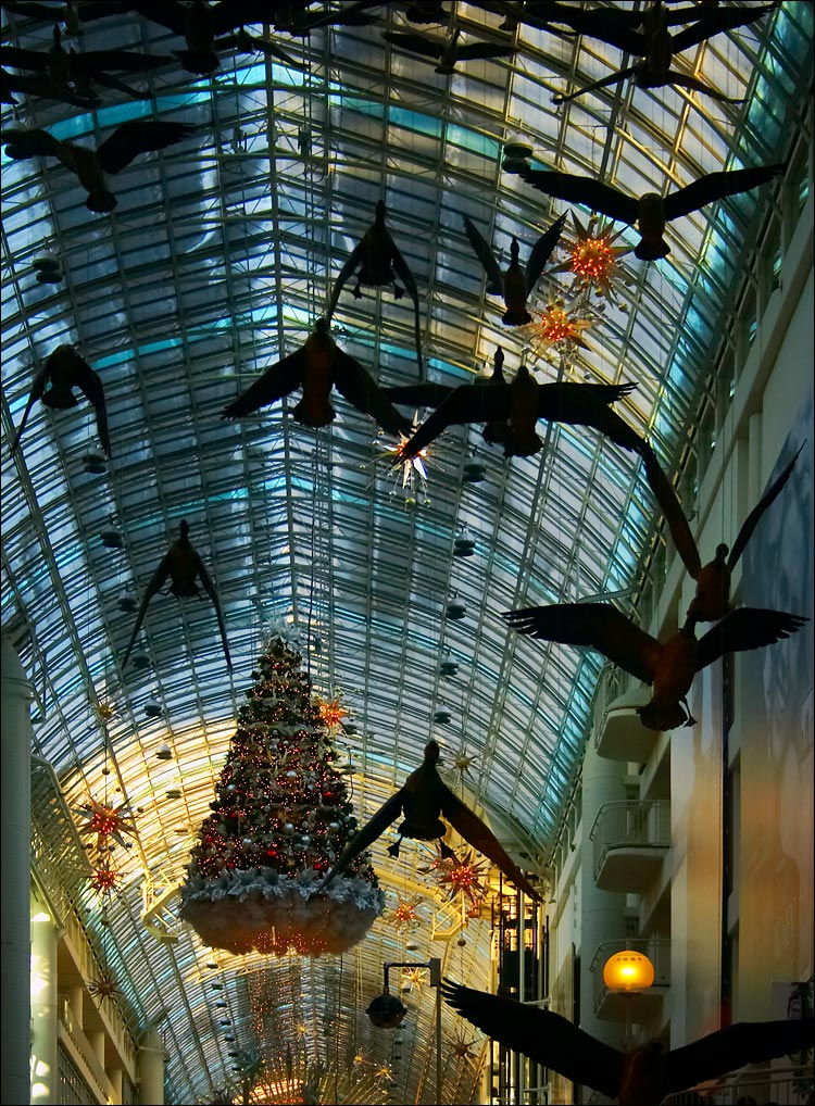 eaton center ceiling || canon 300d/kit lens | 1/20s | f5.6 | ISO 400 | handheld
