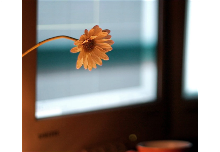 flower and windows || digital rebel | 1/100s | F1.8 | ISO 400