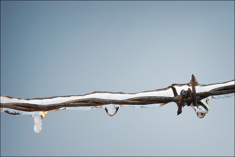 coated barbed wire || canon 300d/kit lens | 1/80s | f6.3 | ISO 200 | handheld