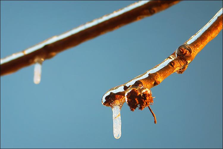frozen branch macro || canon 300d/kit lens | 1/80s | f6.3 | ISO 200 | handheld