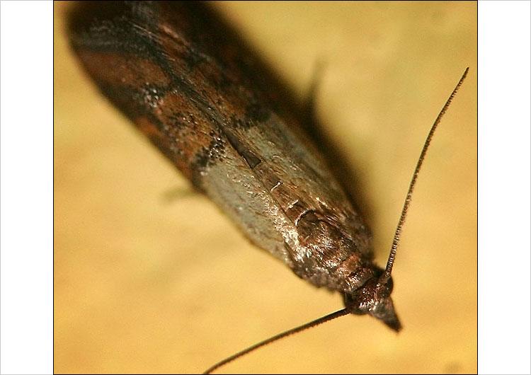 macro insect || digital rebel |1/400s | F5.6 | ISO 400