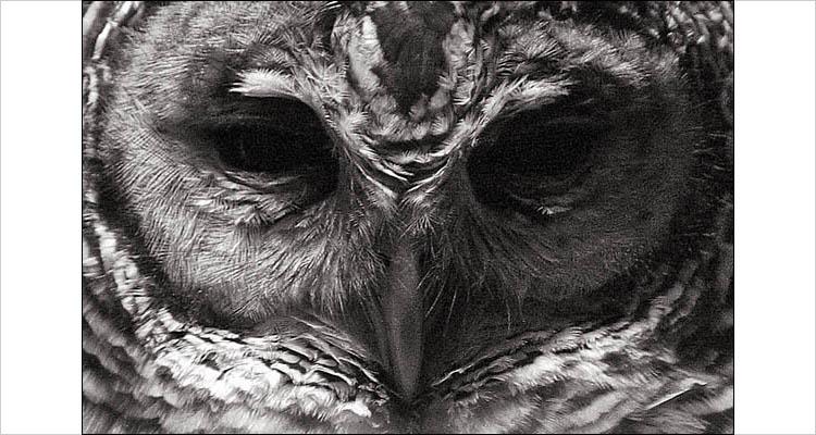 owl's eye || canon G3 | 1/30s | F3 | ISO 200