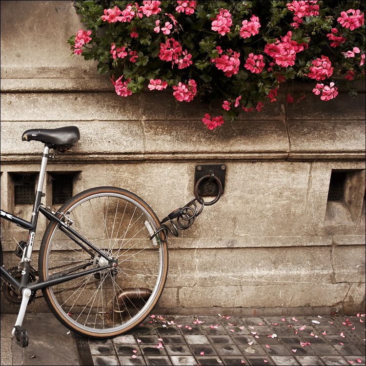 bike lock and flowers || canon350d/ef17-40L@23 | 1/40s | f4.5 | iso200 | handheld