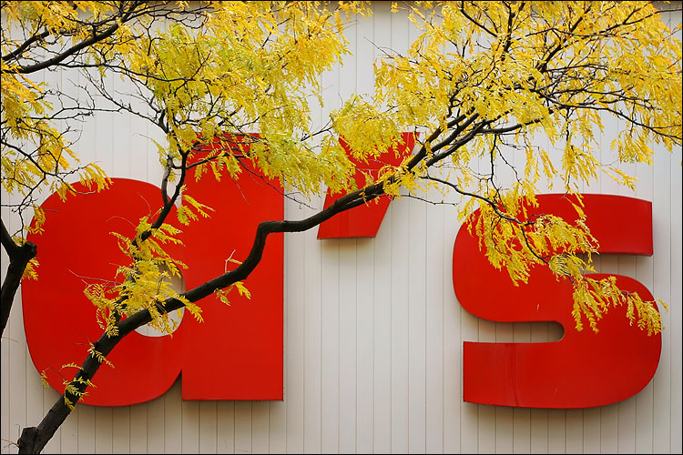 red letters, yellow leaves || canon 300d/kit lens | 1/100s | f2.8 | ISO 100