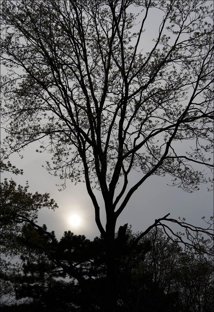 sun through smog || canon 350d/efs18-55@50 | 1/125 | f10 | ISO 100 | handheld
