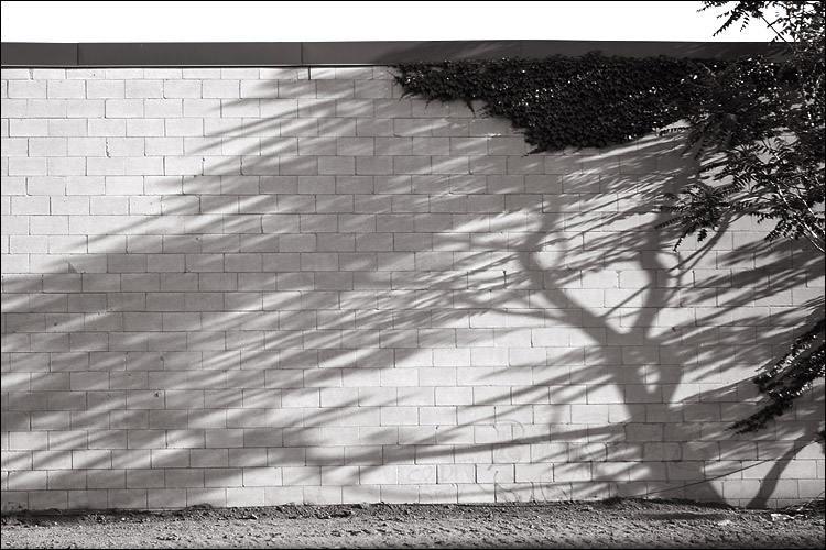 the wall, and tree's shadow || canon 350d/efs18-55@55 | 1/100s | f7.1 | iso100 | handheld