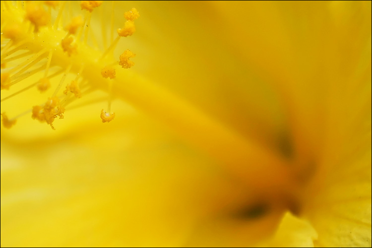 yellow pollen || canon 300d/kit lens | 1/100s | f7.1 | ISO 100