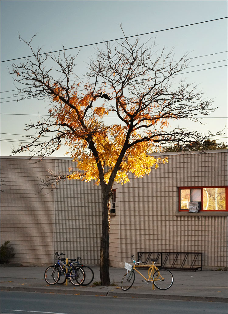 yellow leaves, yellow bike || canon350d/ef17-40L@40 | 1/125s | f7.1 | iso200 | handheld